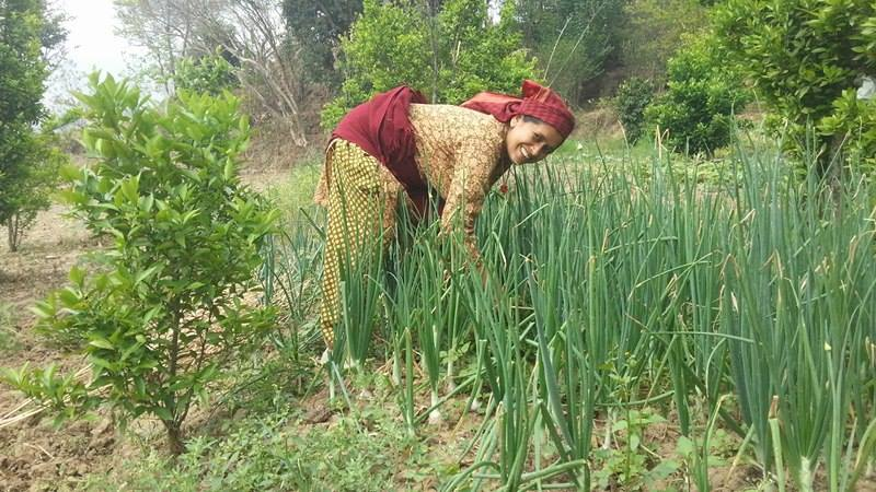 Community Farming Project - Dakshinkali VDC